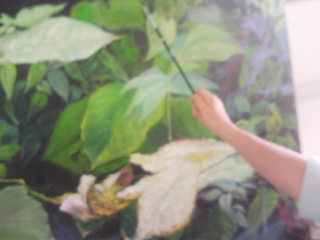 絵を描く 私の手